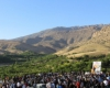 برداشت زردآلو,روستای حیدرآباد,میشخاص,سیوان,ایلام,استان ایلام,ایلام بیدار